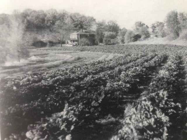 Long Lake Improvement Association - History of Long Lake